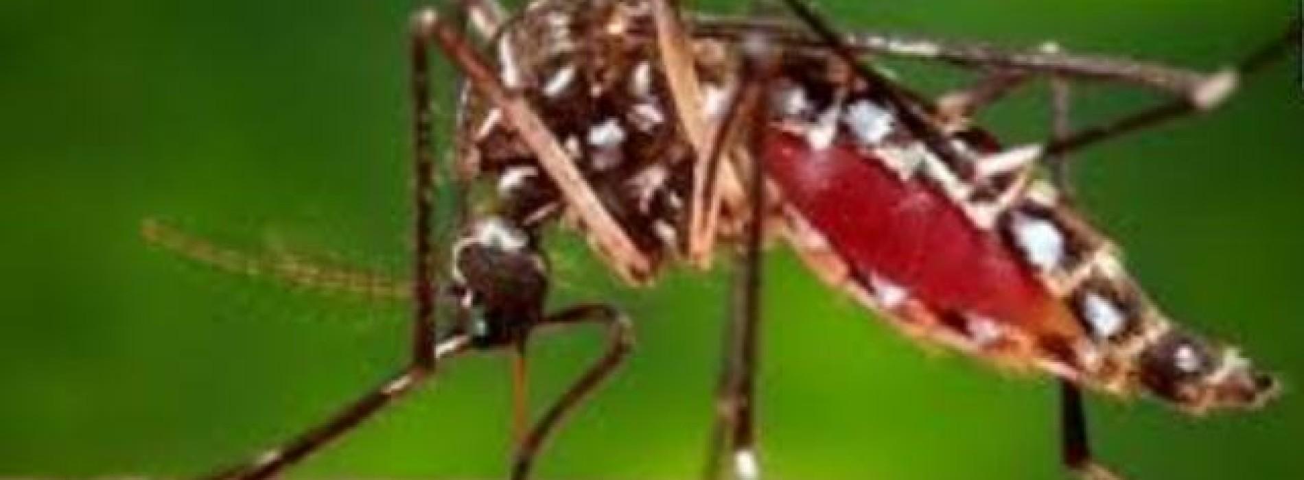 Zika virus set to spread across Americas