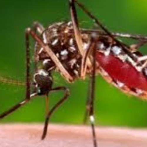 "Zika virus infection: Nigeria ""advises"" travel restriction for pregnant women"
