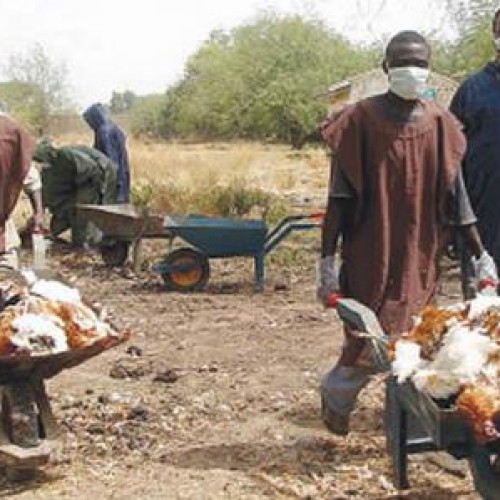 Bird Flu: Plateau Closes 62 Farms