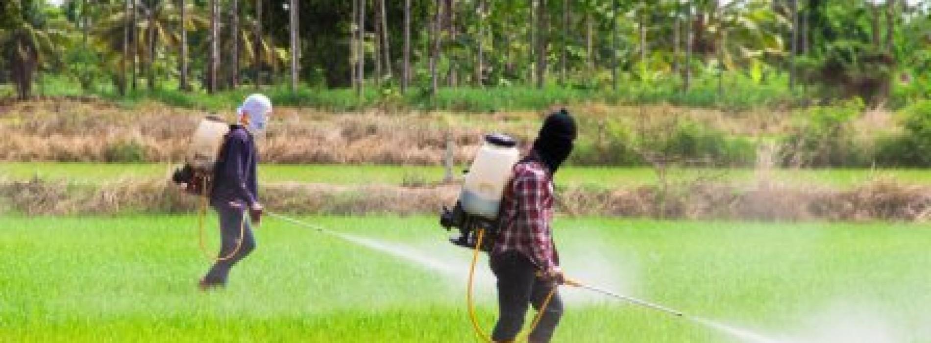 Reps investigates DDT efficacy for  malaria eradication