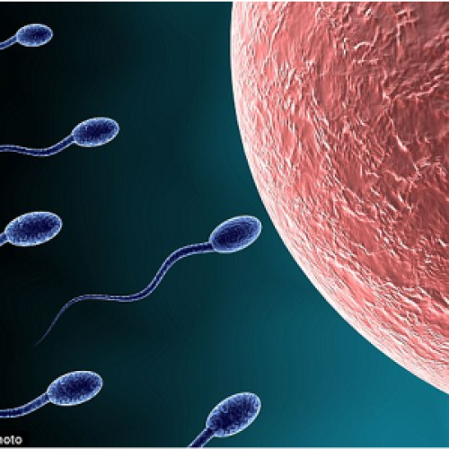 Progress on male contraceptive